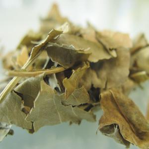 extrait-glyceriné-de-peche-de-vigne